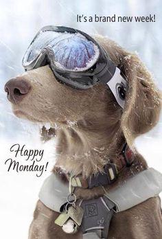 Happy Monday!   winter has arrived !!!! i was hoping it would be delayed a few weeks .... but hey mother nature sure does  ot listen to me !!??... lol lol  happy week stay warm !!!   hugzzzzzzooooooooooooo !!!!!