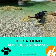 baden mit hund schwimmen Camping Am See, Holland Strand, Lagotto Romagnolo, Dog Travel, Water, Hot Dogs, Animals, Outdoor, Animales