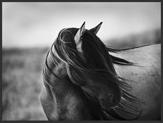 my absolute FAVORITE horse picture !!