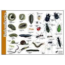 zoekkaart bodemdiertjes