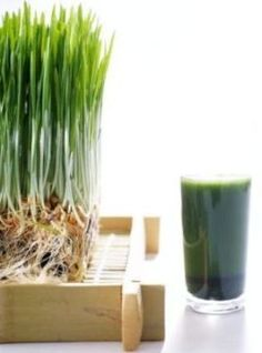 A wheatgrass smoothie packs a big nutritional punch on its own if you don't mind the taste. Smoothie Packs, Smoothies, Smoothie Recipes, Health Diet, Health And Wellness, Six Pack Nutrition, Zinc Rich Foods, Healthy Life, Healthy Eating