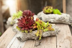 This rustic faux driftwood planter makes a beach of our homegrown succulents, great for indoors or out. For your home! Order online and have it delivered to your home in the BC lower mainland area! www.westcoastgardens.ca
