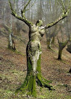 "A dryad is a tree nymph, that is a female spirit of a tree, in Greek mythology. In Greek drys signifies ""oak"". Thus dryads are specifically ..."