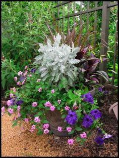 famous butterfly container garden - Google Search