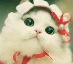 우응? 응? Funny Cute Cats, Cute Cats And Kittens, Cute Funny Animals, Cute Baby Animals, Kittens Cutest, Cute Cats Photos, Cute Pictures, Pretty Cats, Beautiful Cats
