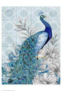 Monochrome Peacocks Blue Art Print at AllPosters.com