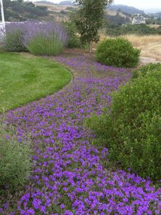 Spaces Annual Flower Bed Designs Design, Pictures, Remodel, Decor and Ideas - page 4