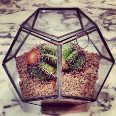 Terrarium, love this for my centipede. Not sure if it would be secure enough.