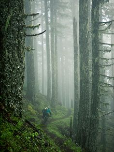 Yeti Mountain bikes loose in the Pacific Northwest