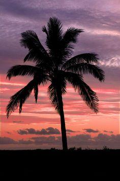 ✮ Hawaiian sunset with coconut palm tree