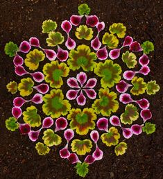 Artist Kathy Klein makes patterns on the ground with flower petals, plant seeds and vegetables.