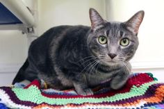 Velvet has been adopted from Seattle Humane http://www.seattlehumane.org/adoption/cats
