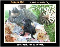 ― Washington Dog Rescue ― ADOPTIONS ―RescueMe.Org