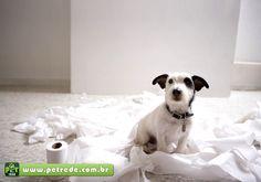O primeiro passo para ensinar seu cachorro a fazer as necessidades no lugar certo é escolher o local com cuidado. Por instinto, o cãozinho desde filhote se afasta da mãe e dos irmãos para fazer as …