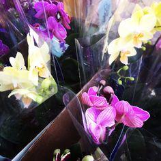 Orquídeas. #adoravelsurpresa #presente #flores #flowers #bouquet #flowershop #gift