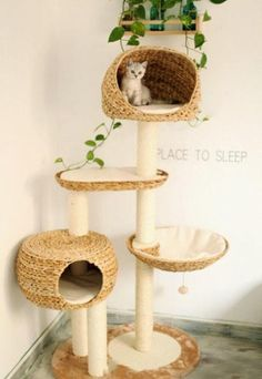 I love the idea of a cat tree and hanging a plant the droops cat friendly leaves down on them! Talk about bring the outdoors inside! More