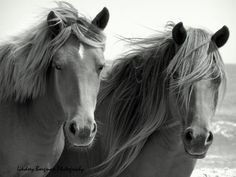 All the Pretty Horses - 8X10 Photographic Print. $25.00, via Etsy.