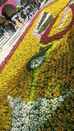 Tapete floral, colibri, Semana Santa
