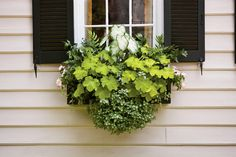 Container Gardens: Look Cool for Summer