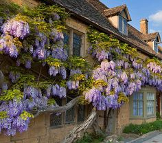 pagewoman: Wisteria Cottage, Broadway, Cotswolds, Worcestershire, England (by alamy) — FUCKITANDMOVETOBRITAIN