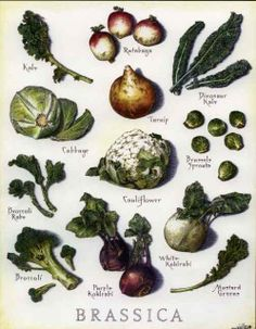 Deep Root Wellness: Brassica helps balance hormones... great for those who suffer from adult acne.