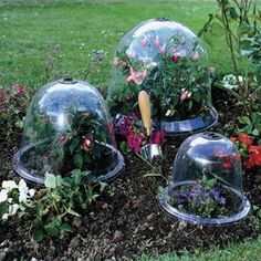 Cloche These Bells Work As Miniature Cold Frames That Capture Sunlight From All Angles To Warm The Ground For Seed Germination Protect Plants Frost