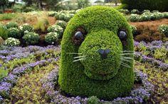 Garten Skulpturen zum Selbermachen buchsbaum tiere seehund