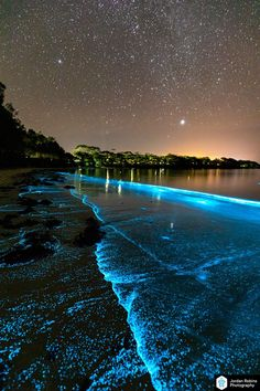Bioluminescence lights up Jervis Bay on Anzac Day