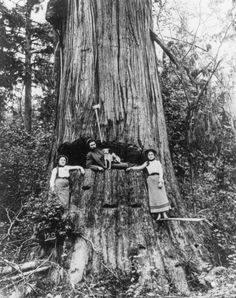 loggers - Google Search