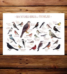 Midwest State Backyard Birds Art Print by Kate Dolamore Art on Scoutmob