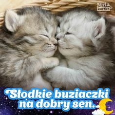 Słodkie buziaczki na Dobranoc #kartki #kotki #dobranoc #nadobranoc #buziaki #polska #aww #sen #koty