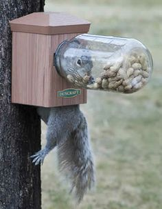 Duncraft.com: Duncraft Bottoms Up Squirrel Jar Feeder -- feeding the squirrels…