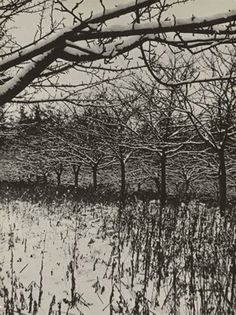 View Verwunschene Bäume Enchanted Trees by Aenne Biermann on artnet. Browse upcoming and past auction lots by Aenne Biermann. Enchanted Tree, New Objectivity, Gelatin Silver Print, Monochrom, Global Art, Art Market, Auction, Museum, Trees