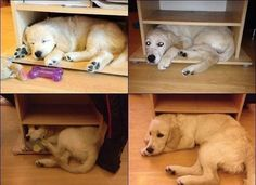 The Growth Spurt | The 100 Most Important Dog Photos Of All Time