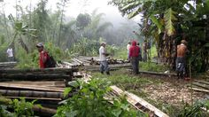 Bamboo Plantations & Investments in Costa Rica