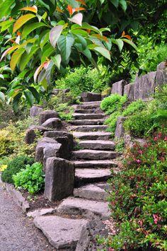 Portland Rhododendron Garden Steps - Johnson-Miles photo