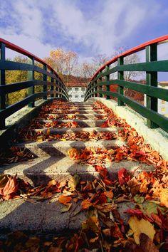 https://flic.kr/p/dyq1jr | Si sta come d'autunno sugli alberi le foglie