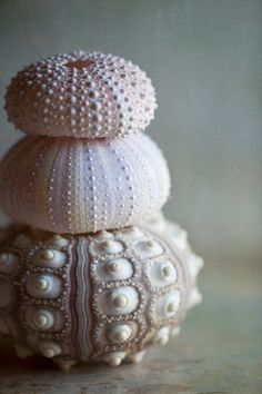 Three urchins....fine art sea shells [photograph by Lauren Dinneweth]