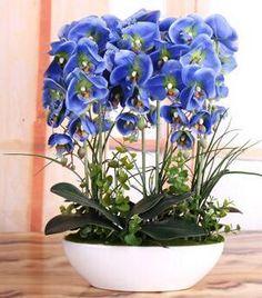 Aliexpress.com: Compre Sementes de orquídeas plantas de simulação de Alta flor da orquídea do phalaenopsis Orquídeas Phalaenopsis Sementes 100 PCS de confiança seeds weeds fornecedores em Beauty Trusty Flower Bonsai Seeds