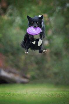 Dogs Can Fly In Funny Photo Series By Claudio Piccoli (20+ Pics) | Bored Panda