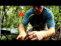Barro Colorado Island: BCI - Official Video - Smithsonian Tropical Research Institute in Panama (8:00) Beautiful video