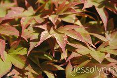 leaves ~ jessalyn.m