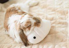 Sleepy bun with bun