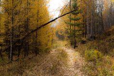 забайкальская осень
