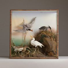 Talisman A Collection of Taxidermy Sea Birds in a Large Glass Case -