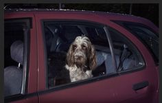 "Martin Usborne – ""MUTE: the Silence of Dogs in Cars"""