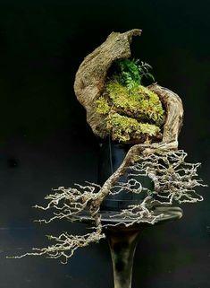 Bougainvillea Bonsai, Bonsai Plants, Bonsai Garden, Indoor Bonsai Tree, Japan Garden, Bonsai Styles, Little Gardens, Native Plants, Ikebana