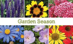 These 10 perennial plants have a range of bloom times to fill your garden with beautiful flowers. #homegrown #flowers #gardenflowers