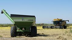 California rice harvest in Yuba City area.