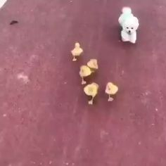 Things that make you go AWW! Like puppies, bunnies, babies, and so on. A place for really cute pictures and videos! Cute Funny Animals, Cute Baby Animals, Funny Dogs, Animals And Pets, Cute Animal Videos, Funny Animal Pictures, Cute Puppies, Cute Dogs, Cute Gif